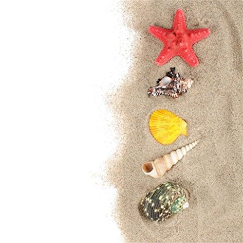 sea shells isolated white background