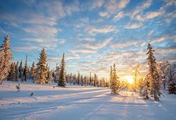 Baocicco Snow Field Pinewoods Sun Ray Blue Sky Backdrop 5x4f